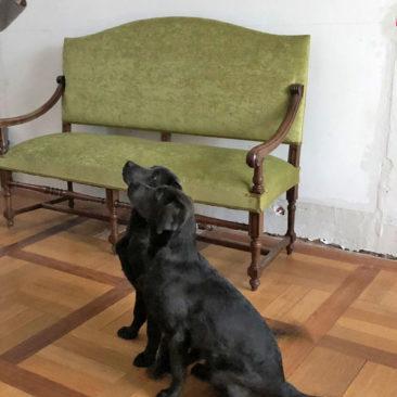 "Hundetrainer Stefan Thal - ""Curt+Lola"" - 4"