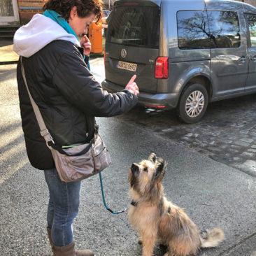 "Hundetrainer Stefan Thal - ""Loki"" - 4"