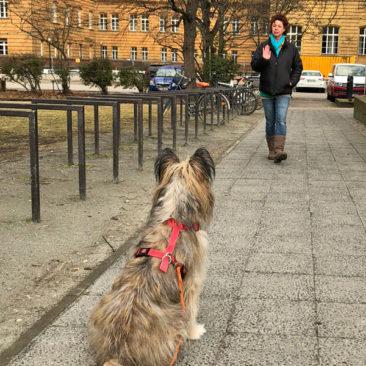 "Hundetrainer Stefan Thal - ""Loki"" - 5"