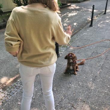 """Hundetrainer Stefan Thal - """"Winnie"""" - 4"""