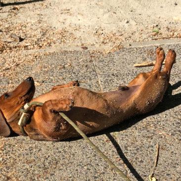 """Hundetrainer Stefan Thal - """"Filou"""" - 1"""