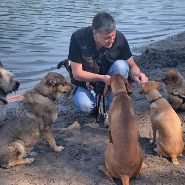 Hundetrainer Stefan Thal - 17