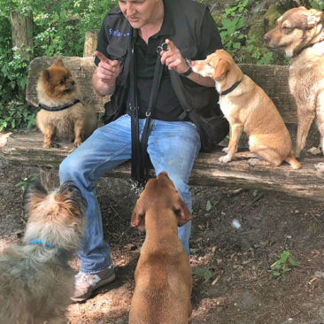 "Hundetrainer Stefan Thal - 18Hundetrainer Stefan Thal ""dogwalking"" - 43"