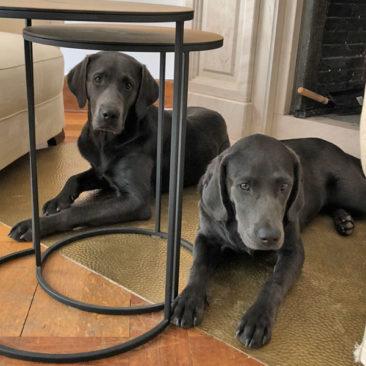 "Hundetrainer Stefan Thal - ""Curt+Lola"" - 7"