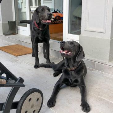"Hundetrainer Stefan Thal - ""Curt+Lola"" - 6"
