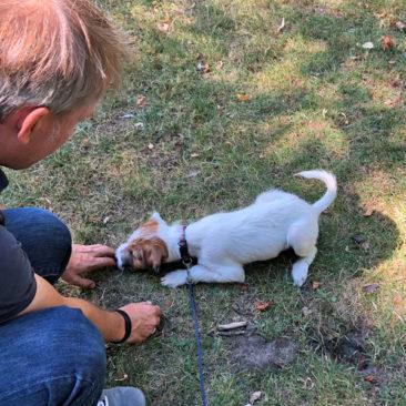 "Hundetrainer Stefan Thal - ""Fluffy"" - 2"