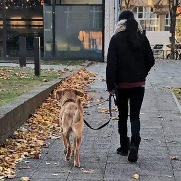 "Hundetrainer Stefan Thal - ""Straßentraining"" - 5"