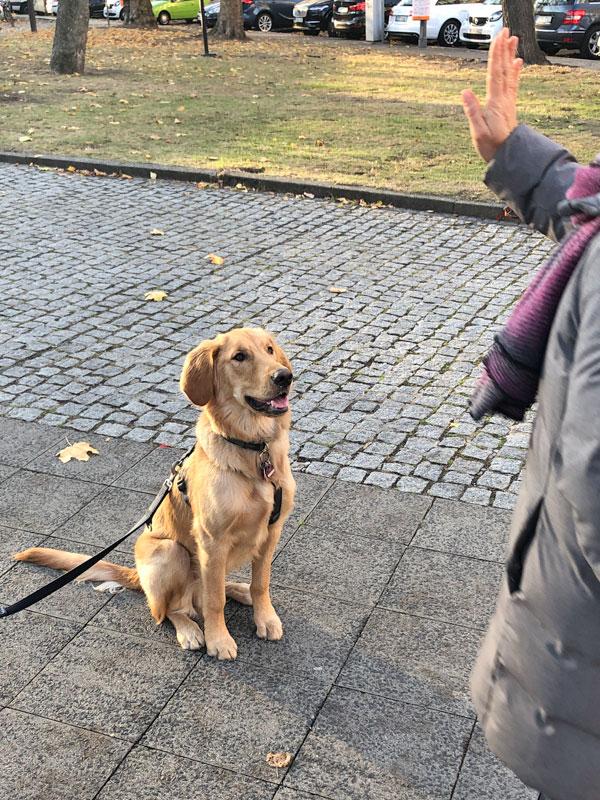 "Hundetrainer Stefan Thal - ""Pipo"" - 1"
