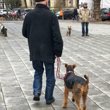 "Hundetrainer Stefan Thal - ""Straßentraining"" - 4"