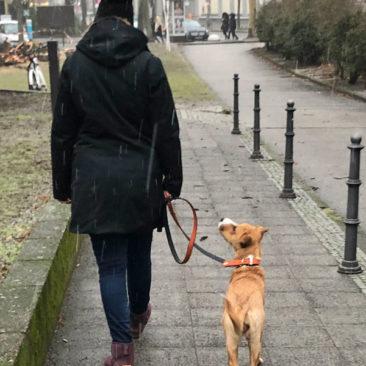 "Hundetrainer Stefan Thal - ""Straßentraining"" - 3"