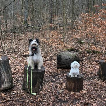 Hundetrainer Stefan Thal - Hundetrainer Stefan Thal - dogwalken - 47
