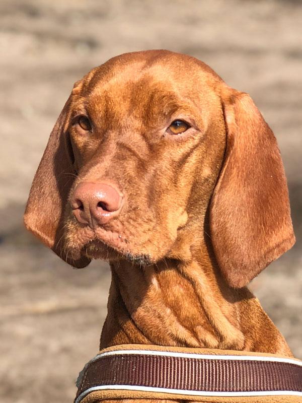 """Hundetrainer Stefan Thal - """"Ashoka"""" - 1"""