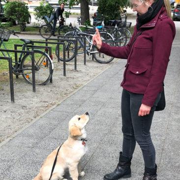 "Hundetrainer Stefan Thal - ""Klara"" - 1"