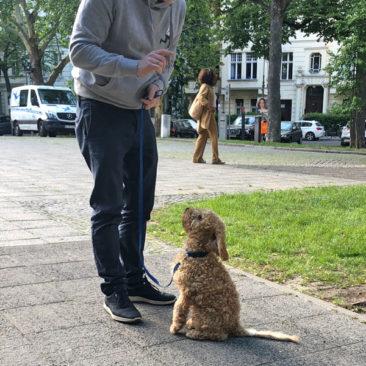 "Hundetrainer Stefan Thal - ""Teddy"" - 5"