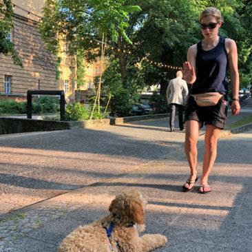 "Hundetrainer Stefan Thal - ""Teddy"" - 3"