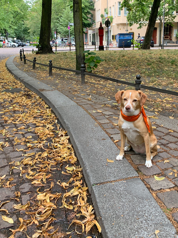Hundetrainer Stefan Thal - Kurs Straßentraining - Lotte 3