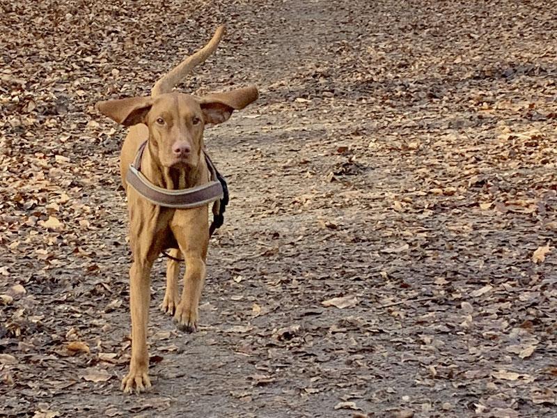 """Hundetrainer Stefan Thal - """"Ashoka"""" - 2"""