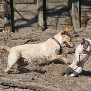 """Hundetrainer Stefan Thal """"dogwalking"""" - 34"""