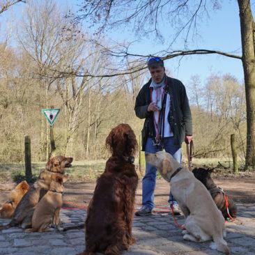 "Hundetrainer Stefan Thal ""dogwalken"" - 33"