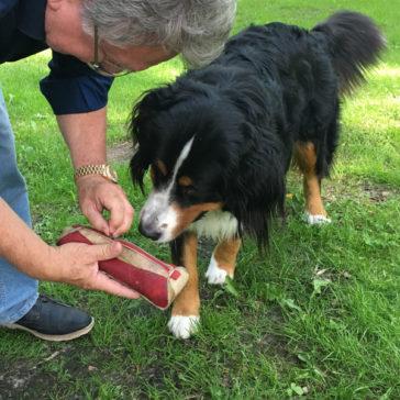 """Hundetrainer Stefan Thal - """"Ginny"""" - Futtertaschentraining -6"""