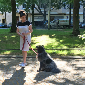 "Hundetrainer Stefan Thal - ""Sally"" - 1"