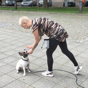 "Hundetrainer Stefan Thal - ""Louis"" - 3"