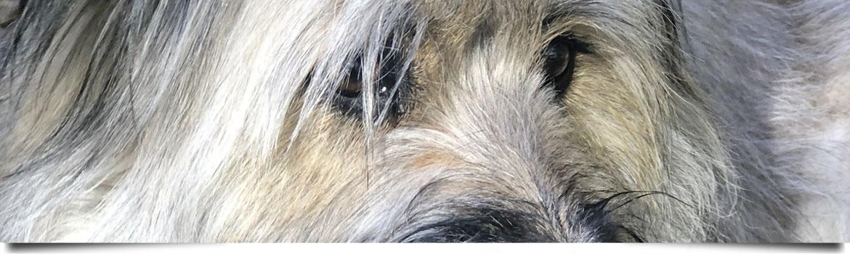 Hundetrainer Stefan Thal -
